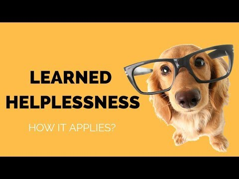 Learned Helplessness - what does it mean to a fearful dog?